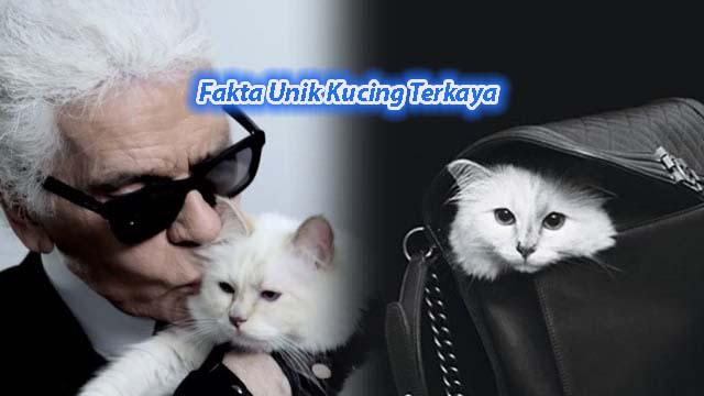 Fakta Unik Kucing Terkaya Di Dunia