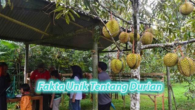 Fakta Unik Tentang Duren Di Candi Borobudur