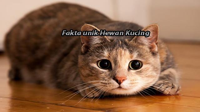 Fakta Unik Dari Hewan Kucing Yang Kalian harus Ketahui
